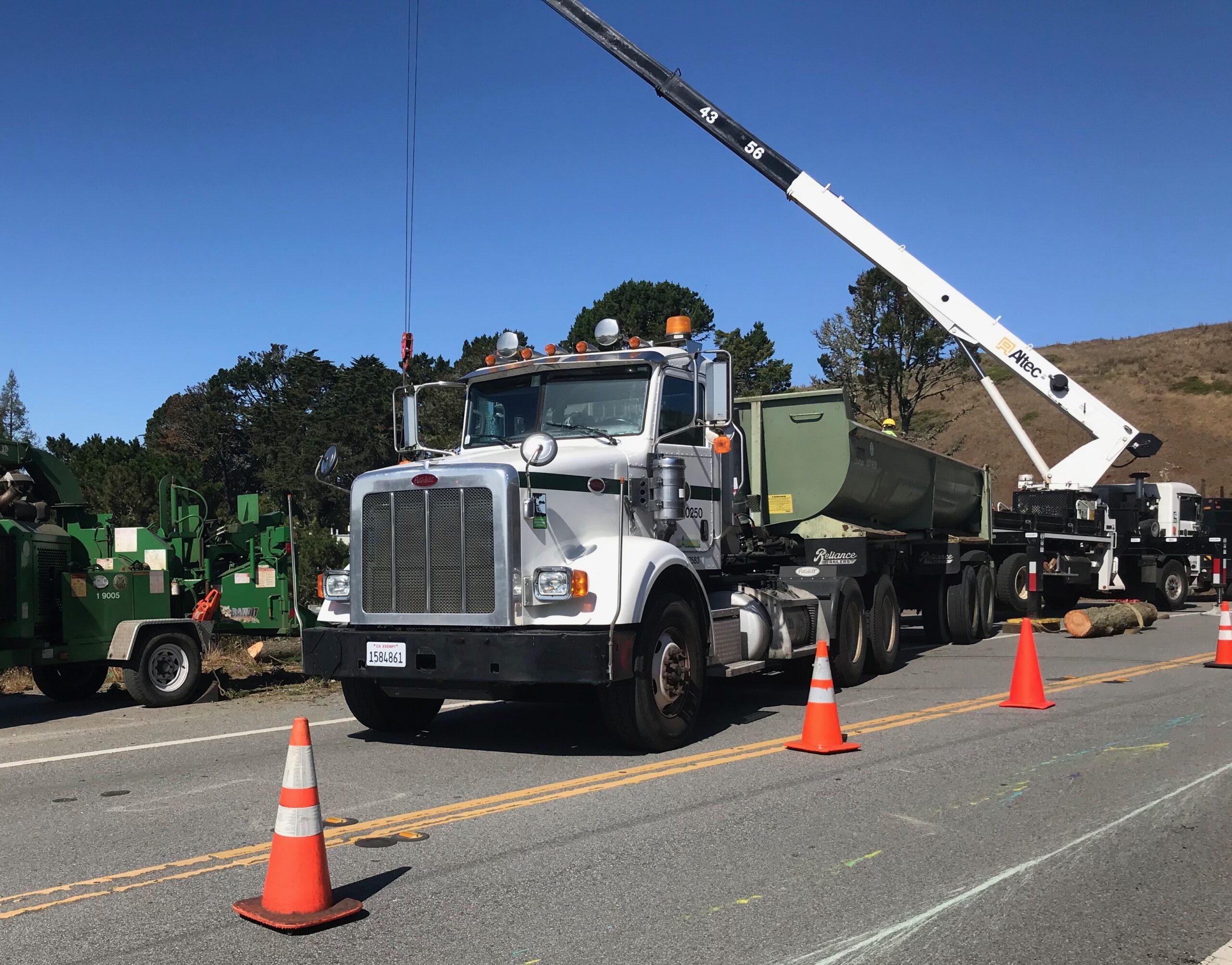 Contractors remove dangerous trees